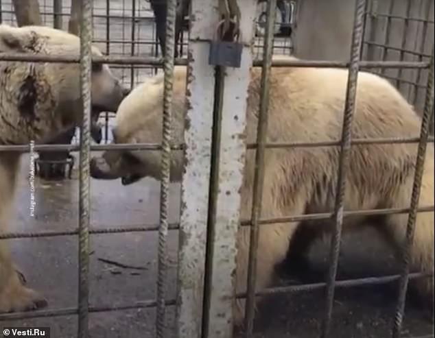 Animais foram abatidos